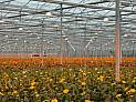 CHP Solutions for Greenhouses